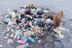 ペットボトルのごみ環境汚染